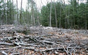 forest clearcut